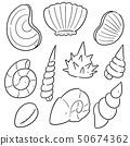 vector set of sea shell 50674362