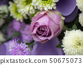 close up of rose flower 50675073