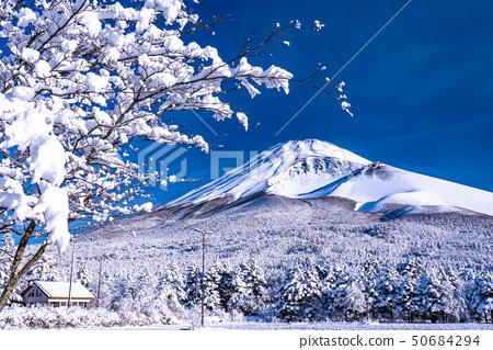 Prefecture จังหวัดชิสึโอกะ山ภูเขาฟูจิทุ่งหิมะขนาดใหญ่ 50684294