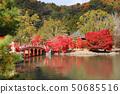 Shiromizu Amidado秋季/净土地花园(福岛县,磐城市) 50685516