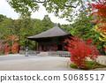 秋天Shiromizu Amidado(福岛县,磐城市) 50685517
