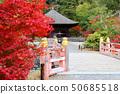 秋天Shiromizu Amidado(福岛县,磐城市) 50685518