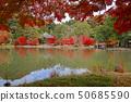 秋天Shiromizu Amidado(福岛县,磐城市) 50685590
