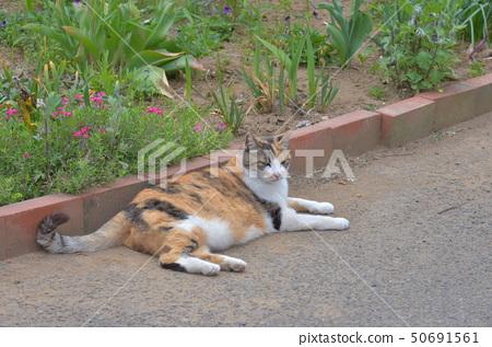 외부 고양이 50691561