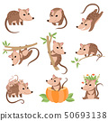 Cute Opossums Animals in Various Poses Set, Adorable Wild Animals Cartoon Characters Vector 50693138