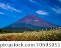 (시즈오카 현) 須山의 메밀 밭과 후지산 50693951