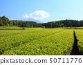 차밭 (초여름) 50711776