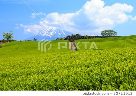 차밭 (초여름) 50711912
