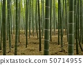 Wakatake Persimmon Bamboo Moth Bamboo Forest 50714955