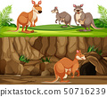 Kangaroo in nature landscape 50716239