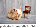 Two rabbits laying down and listening to music box 50716766