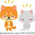 狗和貓弓 50718166