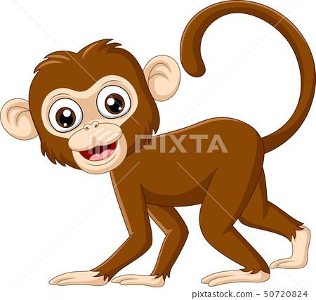 Cute baby monkey on white background 50720824