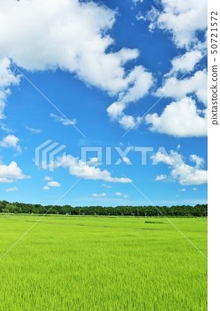 夏天藍天和米領域 50721572