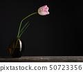Pink tulip on a dark background 50723356