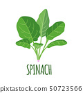 Spinach icon in flat style isolated on white. 50723566