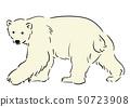 북극곰 50723908