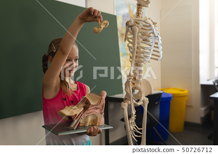 Side view of schoolgirl explaining anatomical model in classroom 50726712