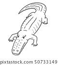 vector of crocodile 50733149