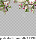 Set of realistic flowering branches, apple tree 50741998