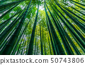 Figure of Bamboo forest seen from below 50743806