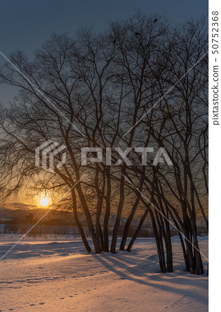 Sunset on snow and tree 50752368