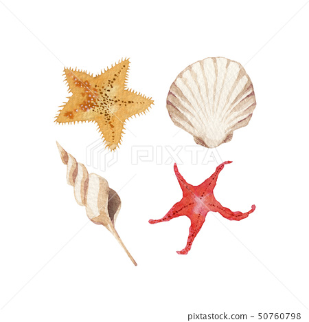 여름 바다 불가사리 조개 수채화 일러스트 50760798