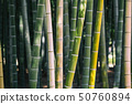 Bamboo grove 50760894