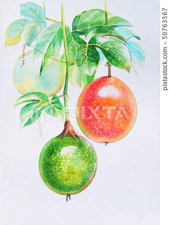Realistic orange ,red,green of passion fruit and 50763567