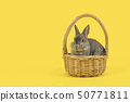 Cute grey rabbit in a wicker basket 50771811