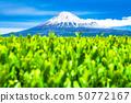 """ทิวทัศน์ """"จังหวัดชิซุโอกะ"""" ของภูเขาไฟฟูจิและไร่ชา 50772167"""