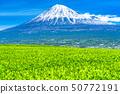 """ทิวทัศน์ """"จังหวัดชิซุโอกะ"""" ของภูเขาไฟฟูจิและไร่ชา 50772191"""