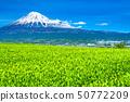 """ทิวทัศน์ """"จังหวัดชิซุโอกะ"""" ของภูเขาไฟฟูจิและไร่ชา 50772209"""