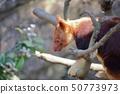 세스시기 위 캥거루 촬영 허가 · 협력 : 요코하마 동물원 즈라 시아 50773973