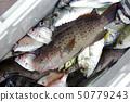 釣魚水果 50779243