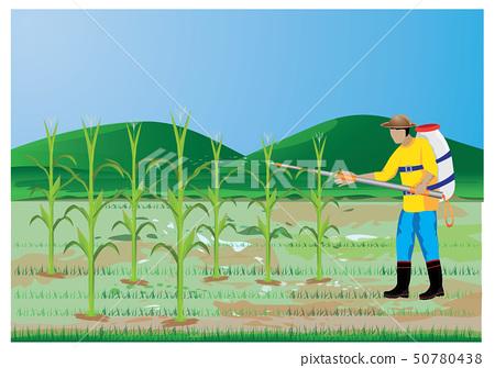 agriculturist sprays corn plant vector design 50780438