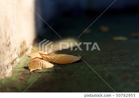 낙엽 50782955