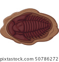 Illustration of trilobite fossil on a white backgr 50786272