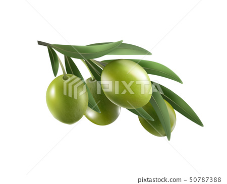Green olive branch isolated on white background as package design composition 50787388