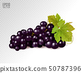 Realistic illustration of an isolated bunch of black grapes with green leaves. Vector illustration 50787396