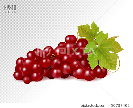 Bunch of red grapes with vine leaves isolated on transparent background. Realistic, fresh, natural 50787403