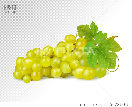 Bunch of yellow or green grapes with vine leaves isolated on transparent background. Cluster of 50787407