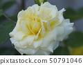 클라우디아 카르 디 날레 50791046