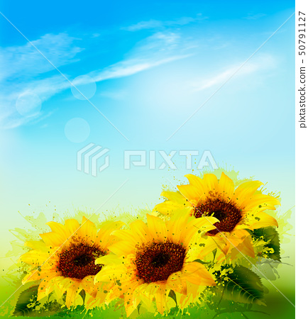 Nature background with sunflowers and blue sky. 50791127