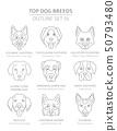 Top dog breeds. Hunting, shepherd and companion 50793480