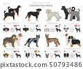 Shepherd and herding dogs collection isolated on 50793486