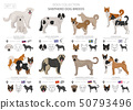 Shepherd and herding dogs collection isolated on 50793496