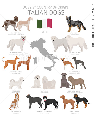 Dogs by country of origin. Italian dog breeds. 50793817