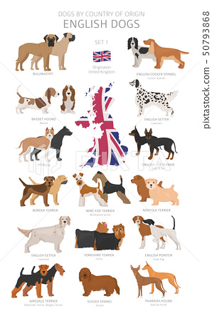Dogs by country of origin. English dog breeds. 50793868