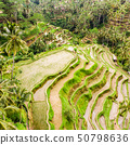 Drone view of Tegalalang rice terrace in Bali, Indonesia, with palm trees and paths for touristr to 50798636
